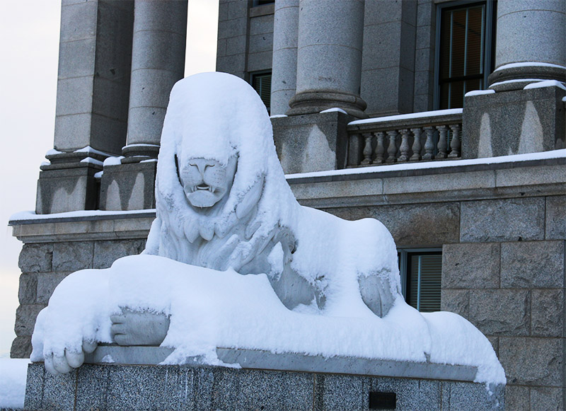 capitol snow lion for web